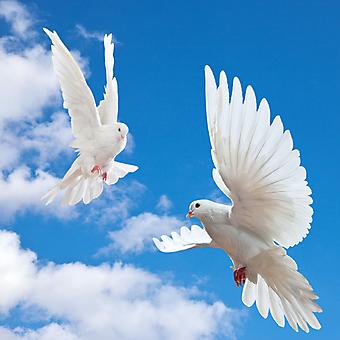 Фотообои Белые голуби и небо. (Код изображения: 12026)