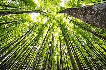 Рассвет в весеннем лесу (Каталог номер: 12079)