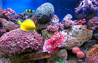 Подводный мир. (Код изображения: 07001)
