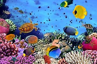 Кораллы, красное море. (Код изображения 07004)