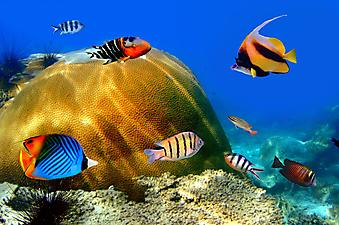 Рыбки. (Код изображения 07005)