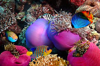 Яркие рыбки. (Код изображения 07006)
