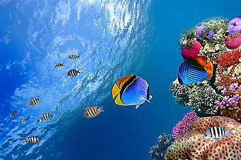 Красное море. (Код изображения 07007)