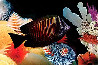 Рыбка. (Код изображения 07008)