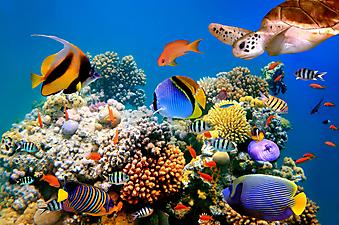 Коралловый риф. (Код изображения 07009)
