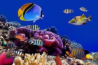 Подводный мир. (Код изображения 07010)