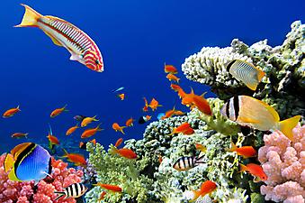 Коралловый риф. (Код изображения 07012)