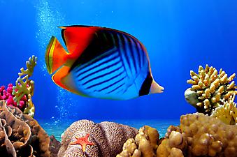 Красное море. (Код изображения 07014)