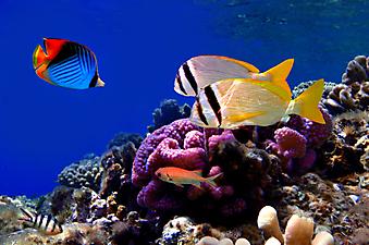 Коралловый риф. (Код изображения 07015)