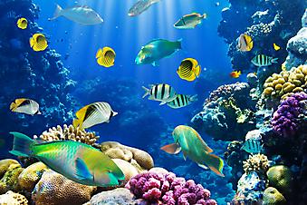 Коралловый риф. (Код изображения 07018)