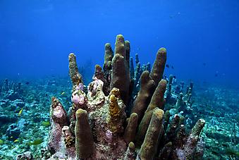 Коралловый столб. (Код изображения 07020)