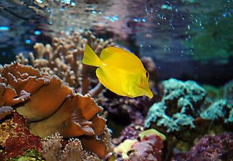 Тропические рыбы. (Код изображения 07021)