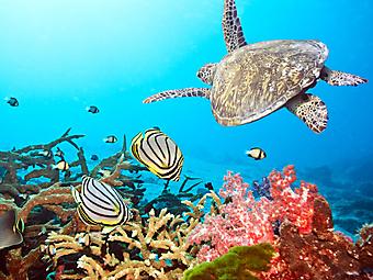 Морская черепаха. (Код изображения 07027)