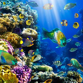 Коралловый риф. (Код изображения 07031)