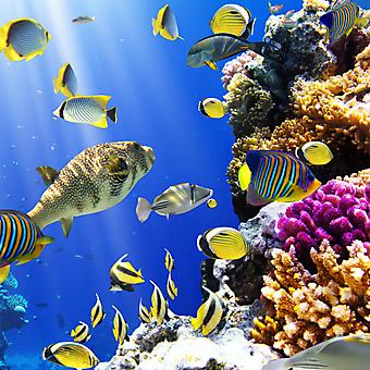 Коралловый риф. (Код изображения 07032)