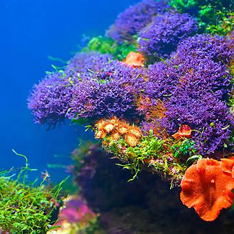 Подводная флора. (Код изображения 07033)