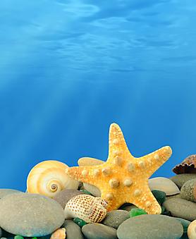 Подводный мир. (Код изображения 07034)