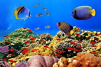 Рыбки кораллового рифа (Каталог номер: 07036)