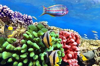 Рыбки у ярких кораллов (Каталог номер: 07040)