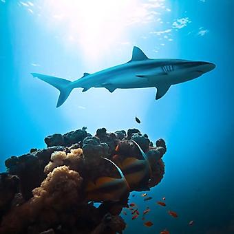 Охота на коралловом рифе (Каталог номер: 07045)