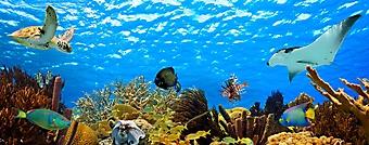 Панорама подводного мира (Каталог номер: 07046)