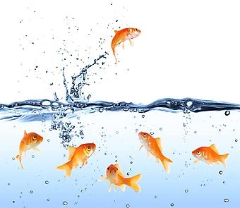 Золотая рыбка (Каталог номер: 07048)