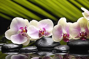 Орхидеи и камни. (Код изображения:  09006)