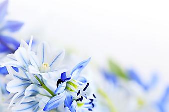Первые весенние цветы. (Код изображения: 09008)