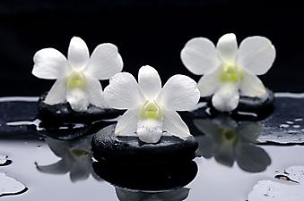 Белая орхидея. (Код изображения: 09009)
