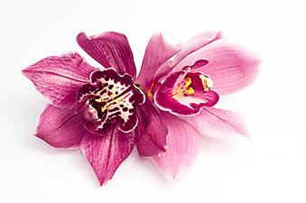 Орхидея. (Код изображения:  09012)