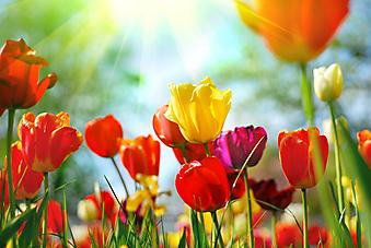 Красивые весенние цветы. (Код изображения: 09028)
