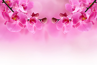 Розовый цветок орхидеи. (Код изображения: 09032)