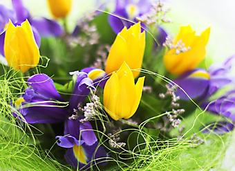 Ирисы и тюльпаны. (Код изображения: 09038)