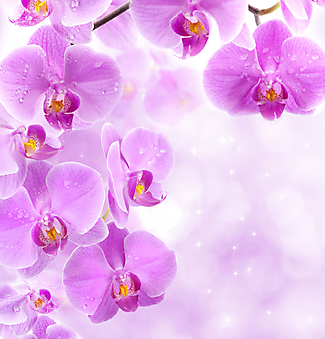 Белый цветок на фиолетовом фоне