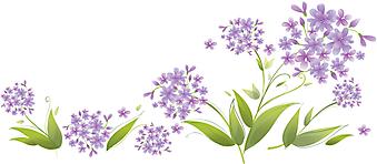 Нарисованные цветки гортензии. (Код изображения: 09126)