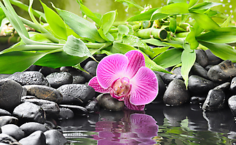 Орхидея на фоне бамбуковых стеблей. (Код изображения: 09178)
