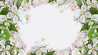 Рамка из белых цветов. (Код изображения: 09189)