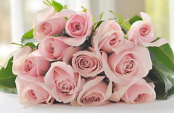 Нежный букет из розовых роз. (Код изображения: 09202)