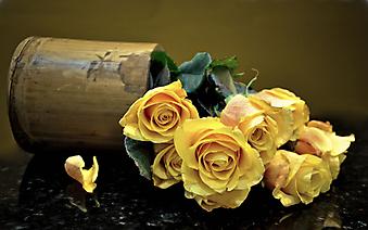 Желтые розы в опрокинутой вазе. (Код изображения: 09204)