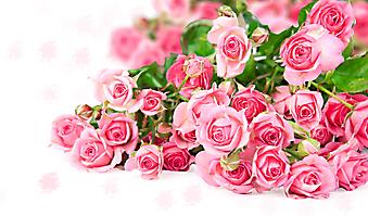 Огромный букет розовых роз. (Код изображения: 09211)