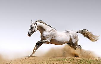 Лошадь в пыли. (Код изображения: 11007)