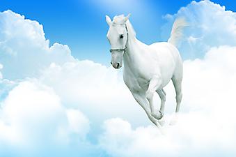 Небесная лошадь. (Код изображения: 11016)