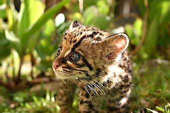 Котенок. (Код изображения: 11044)