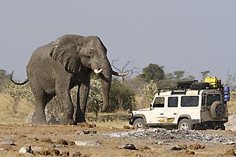 Африканский слон. (Код изображения: 11047)