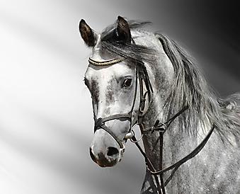 Лошадь. (Код изображения: 11066)