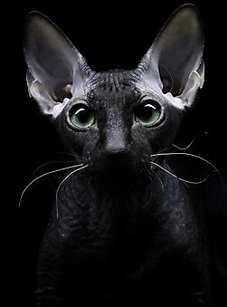 Котенок. (Код изображения: 11092)