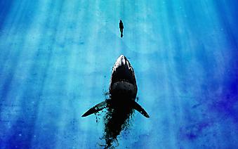 Акула и дайвер. (Каталог номер: 11116)