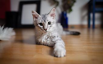 Глазастый котенок. (Каталог номер: 11143)