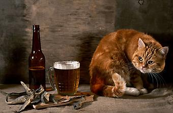 Кот и пиво. (Каталог номер: 11145)