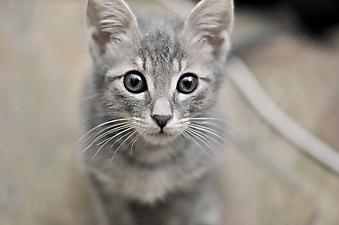 Милый котенок. (Каталог номер: 11148)
